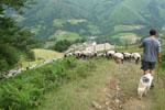 Sébastien Uthurriaguearrive de la montagne avec son troupeau. Sa ferme est en contrebas.